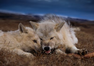 Photo from Kingdom of the White Wolf